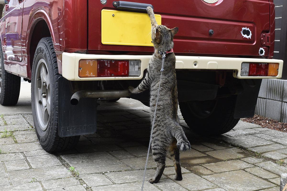 車に乗ろうとする虎ノ介