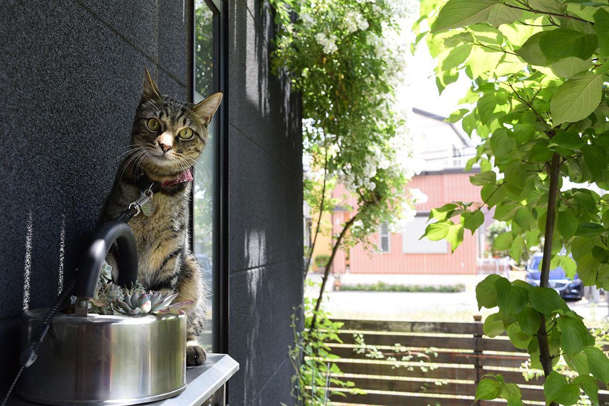 郵便受けの上に飛び乗ったキジトラ猫の虎ノ介