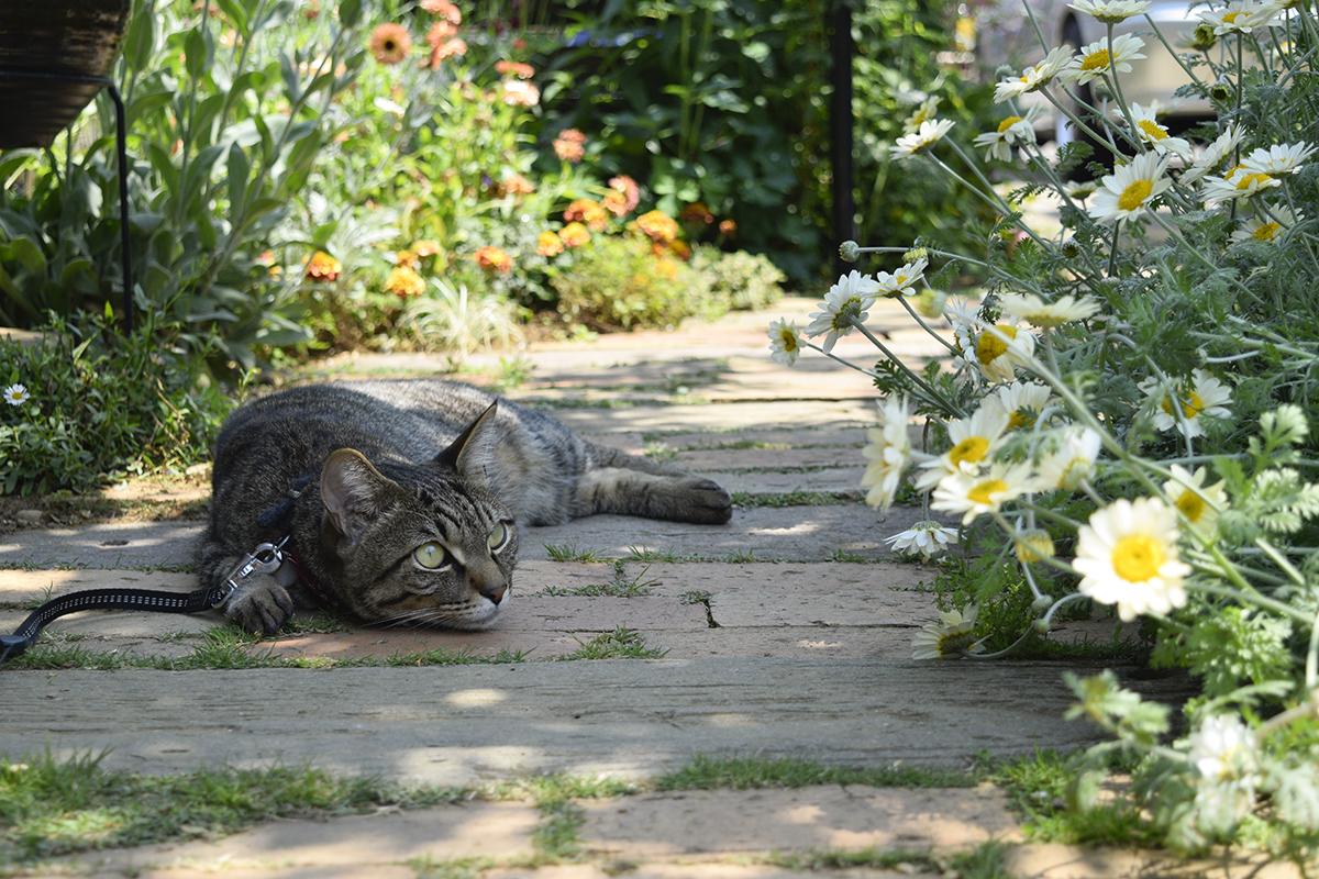 庭でくつろぐ虎ノ介
