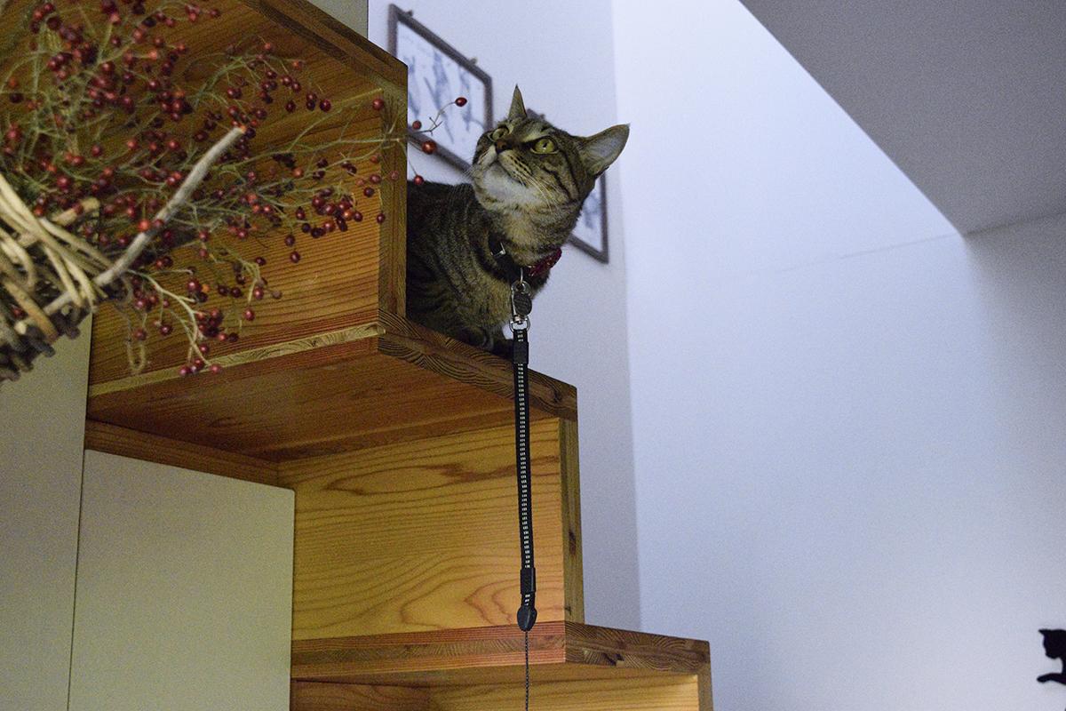 お散歩スイッチがオフになってしまったキジトラ猫の虎ノ介