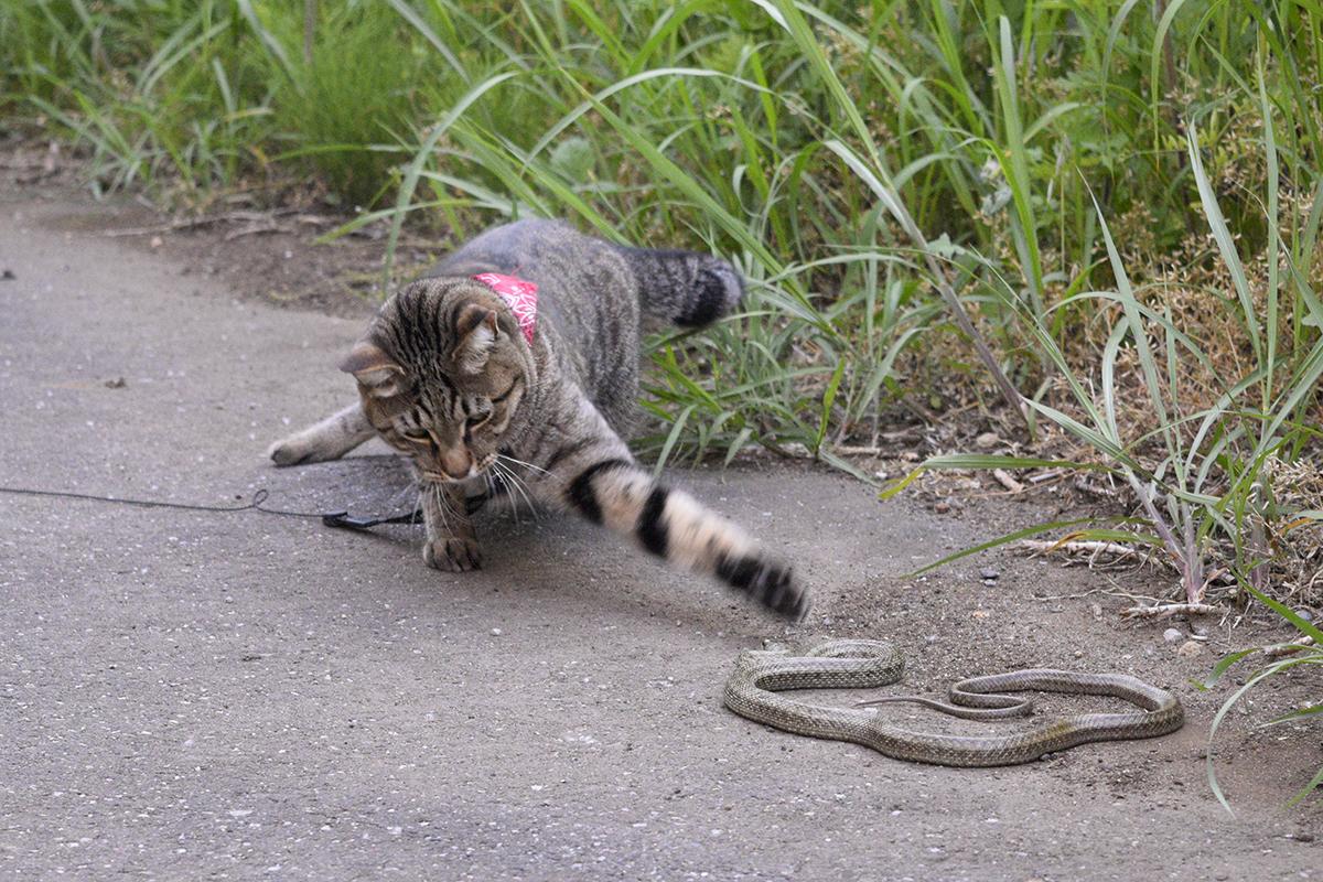 ヘビと戦う虎ノ介