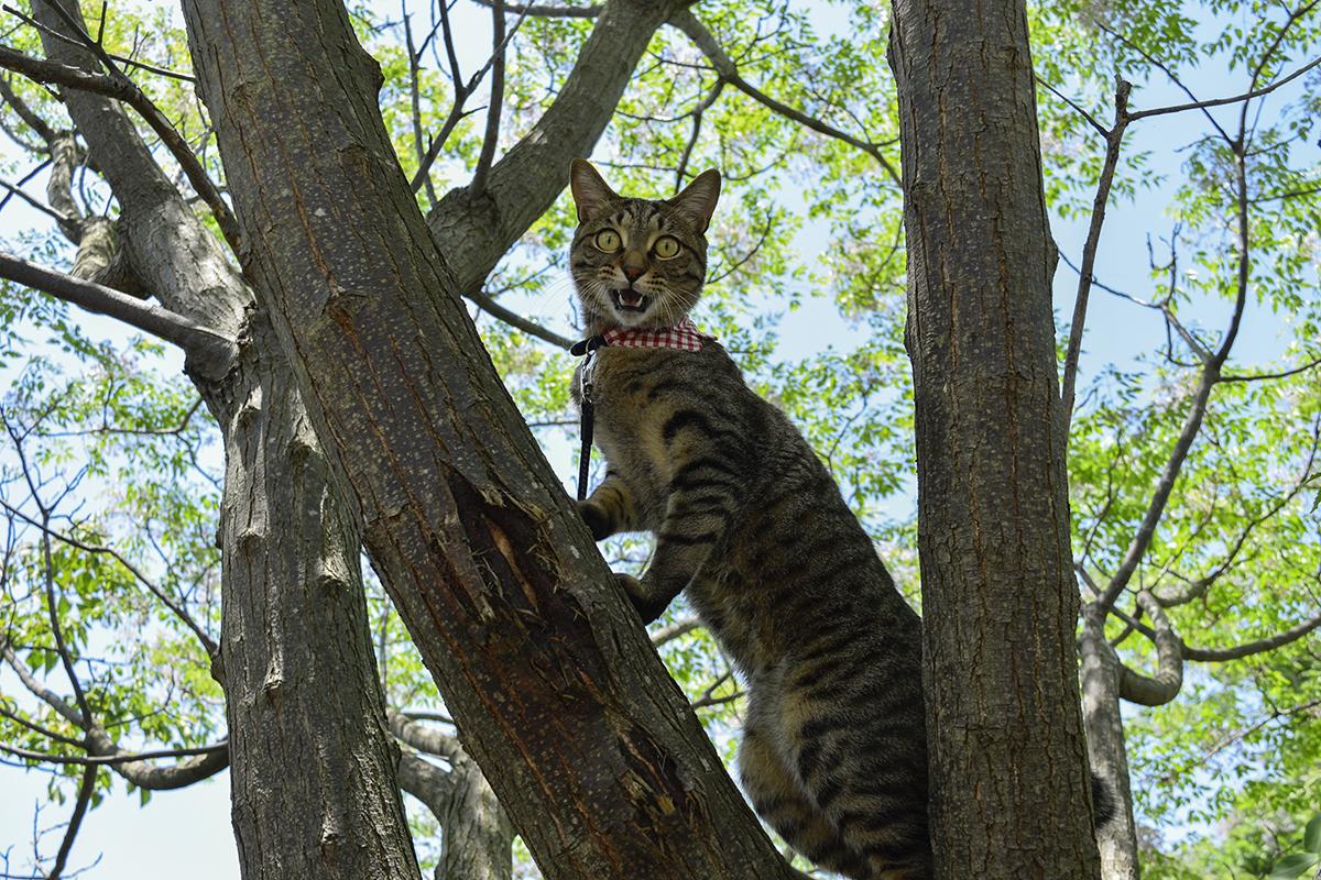 鳥に逃げられて悔しそうなキジトラ猫の虎ノ介