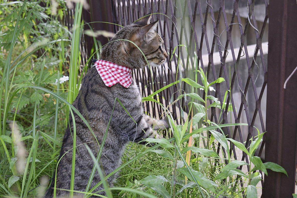 何かを発見したキジトラ猫の虎ノ介