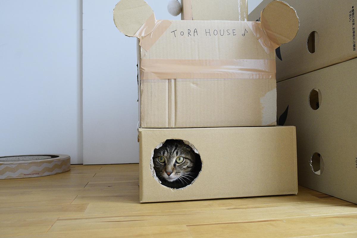 段ボールハウスにはいるキジトラ猫の虎ノ介