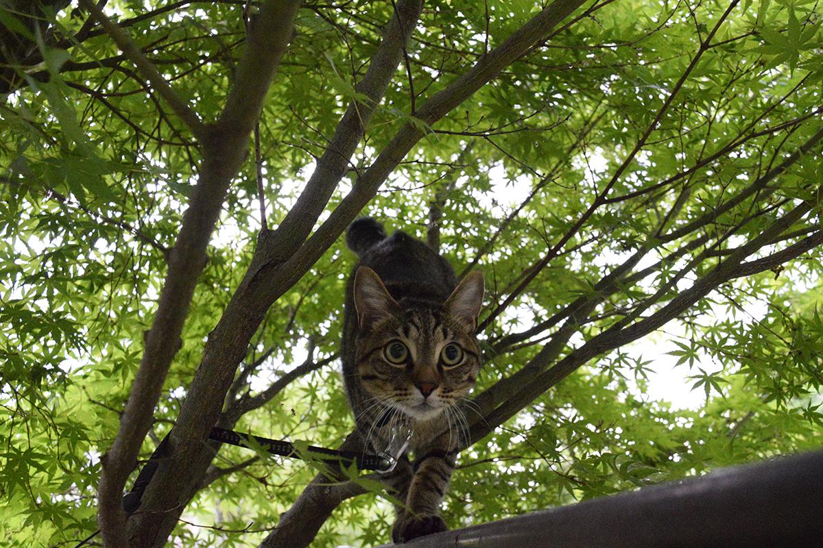 フェンス伝いに鳥に近づく虎ノ介