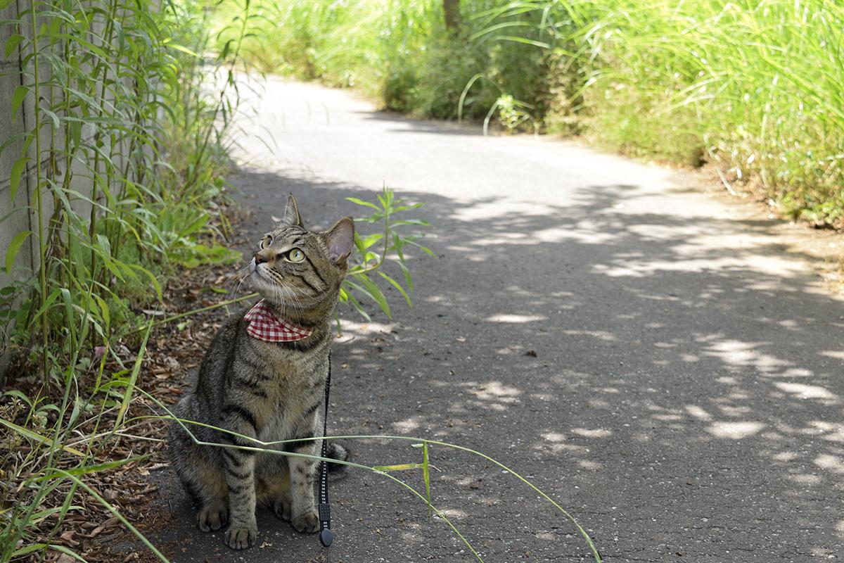 飛ぶ練習をしている鳥が気になるキジトラ猫の虎ノ介