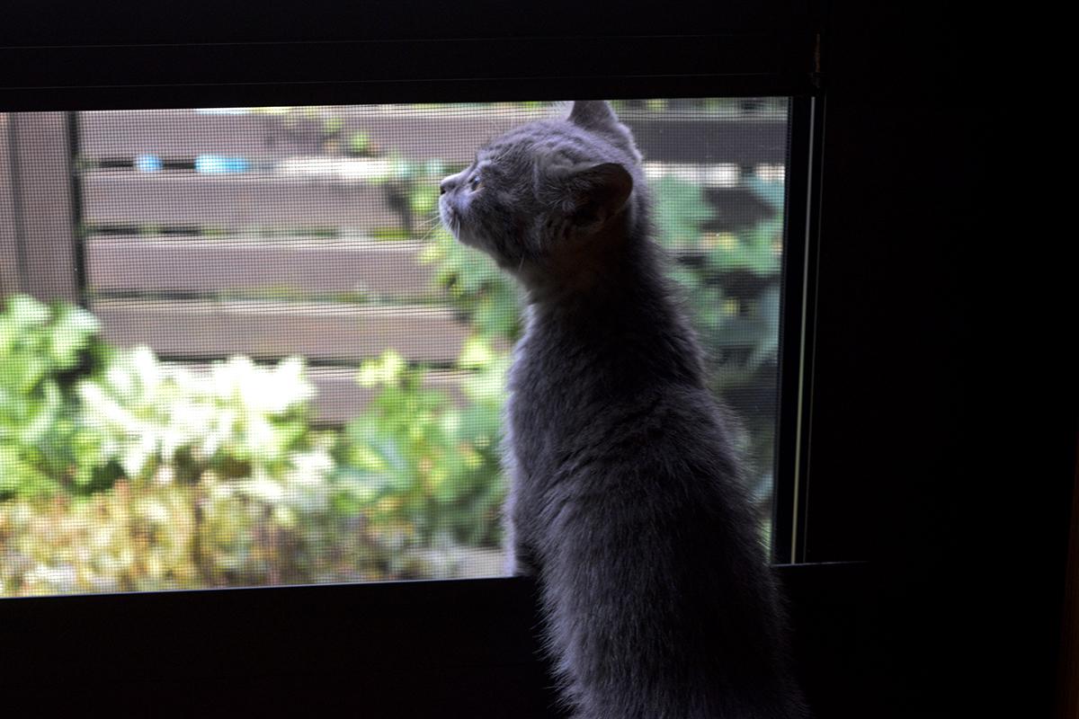 外を眺める新入り猫