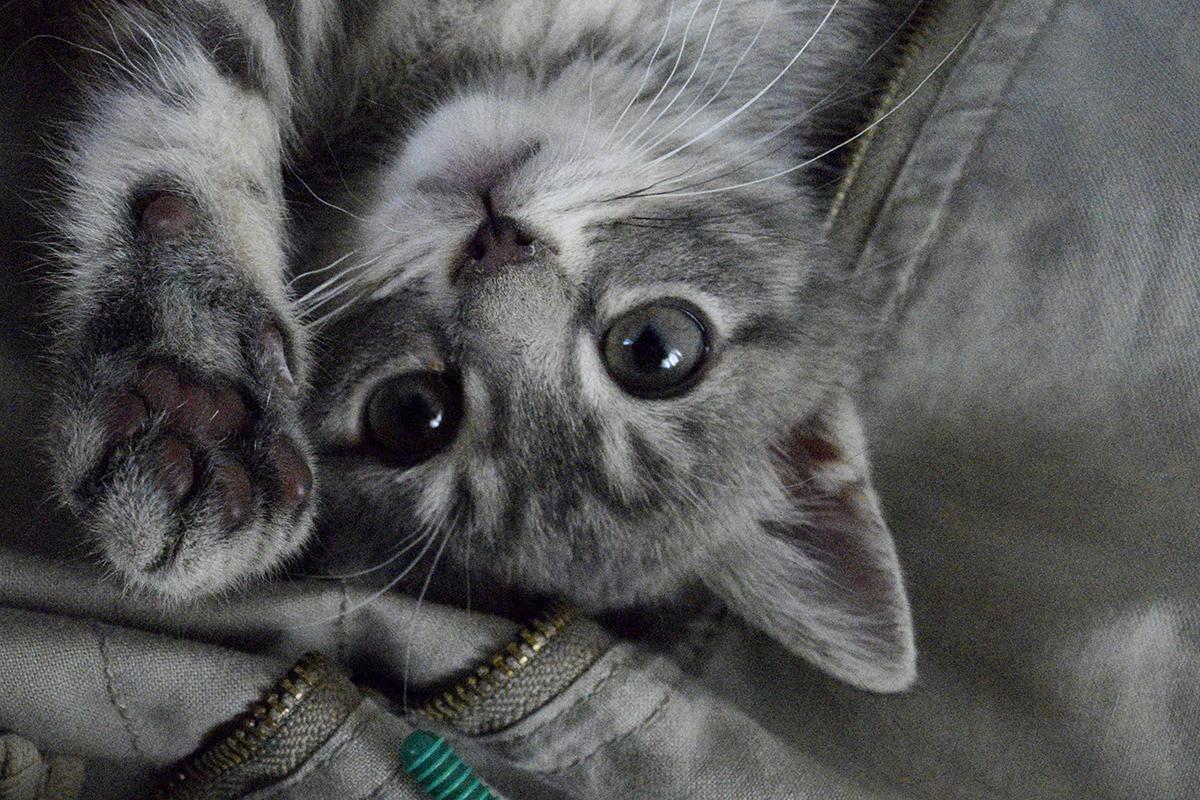 人間に甘える新入り猫