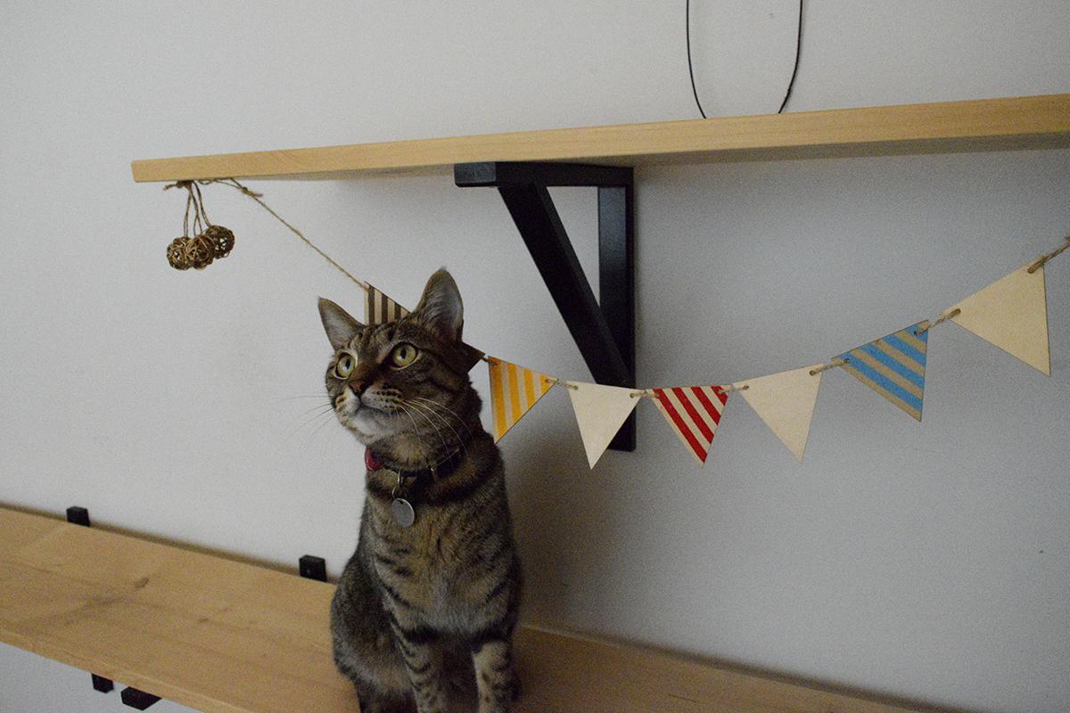 少し高い場所でカシャカシャぶんぶんで遊ぶキジトラ猫の虎ノ介
