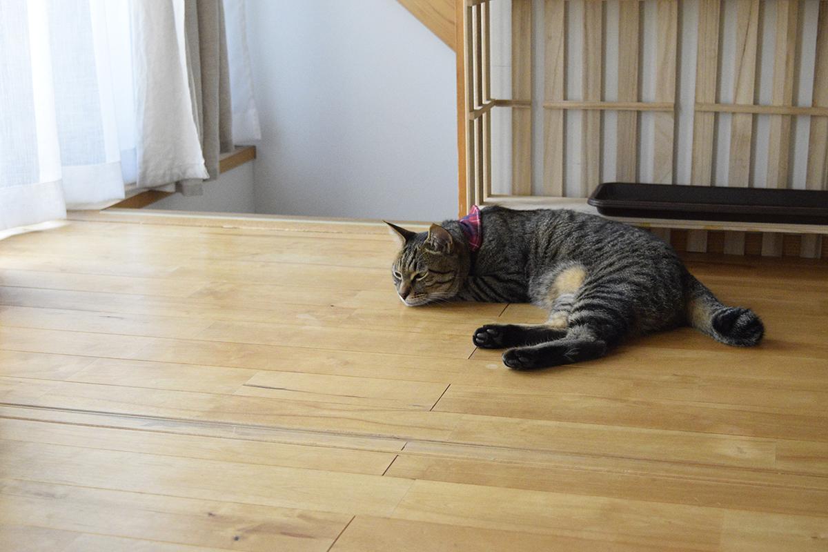 廊下で寝るキジトラ猫の虎ノ介