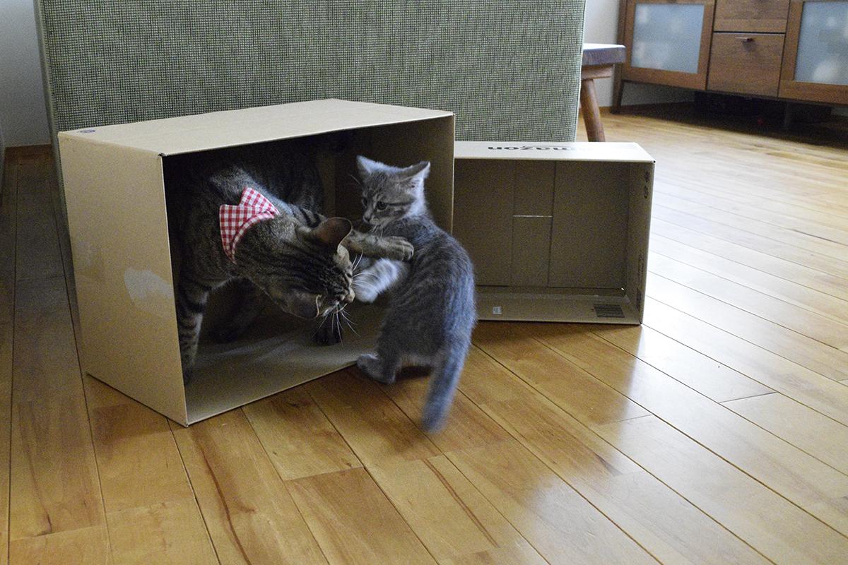 虎ノ介が入った箱に入りたがる春太