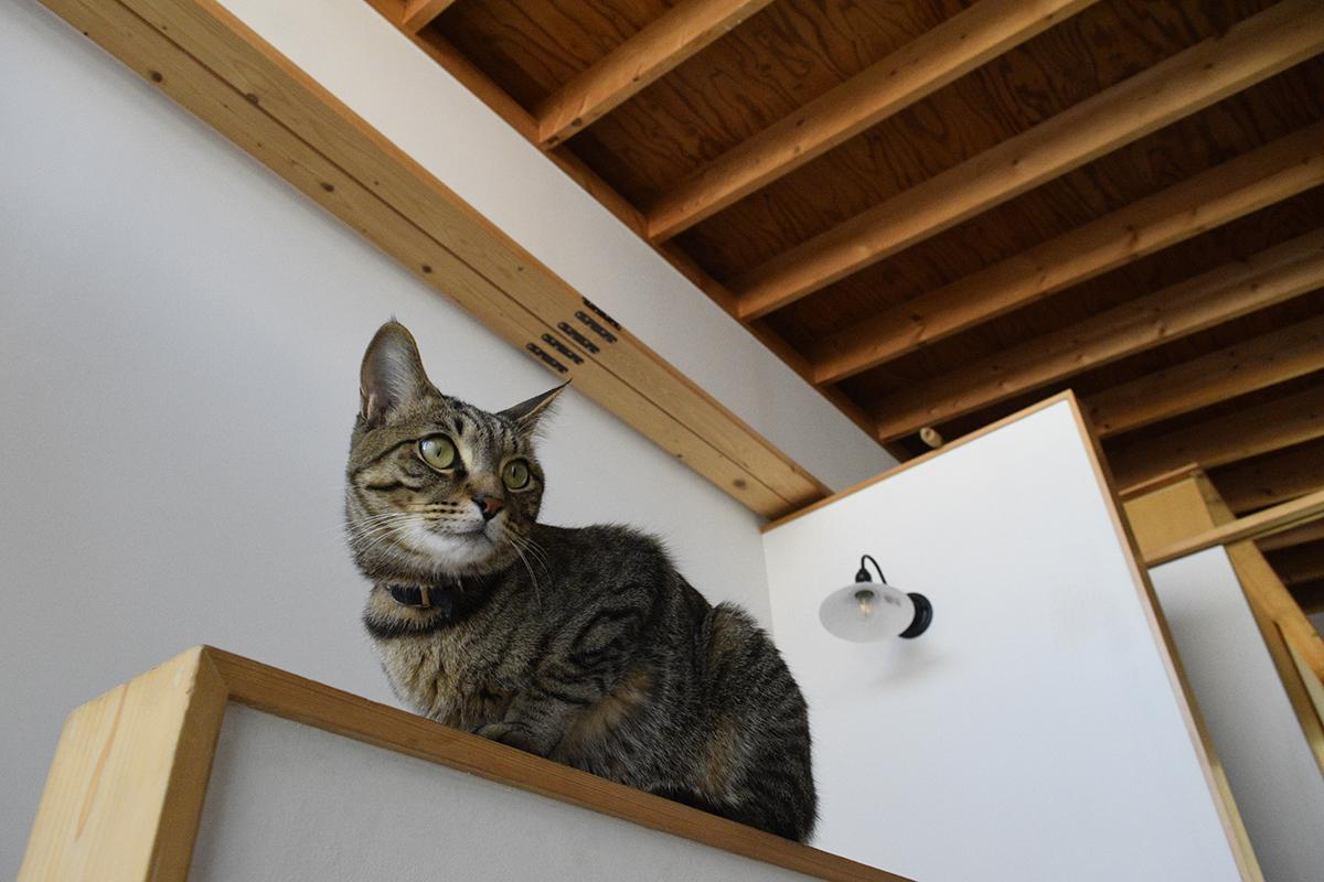 階段の手すりの上に乗るキジトラ猫の虎ノ介