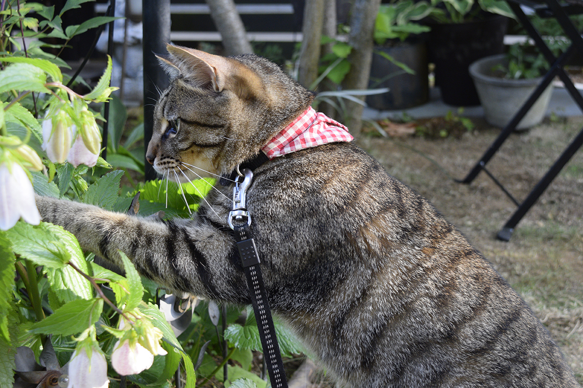 外で虫をおいかけるキジトラ猫の虎ノ介