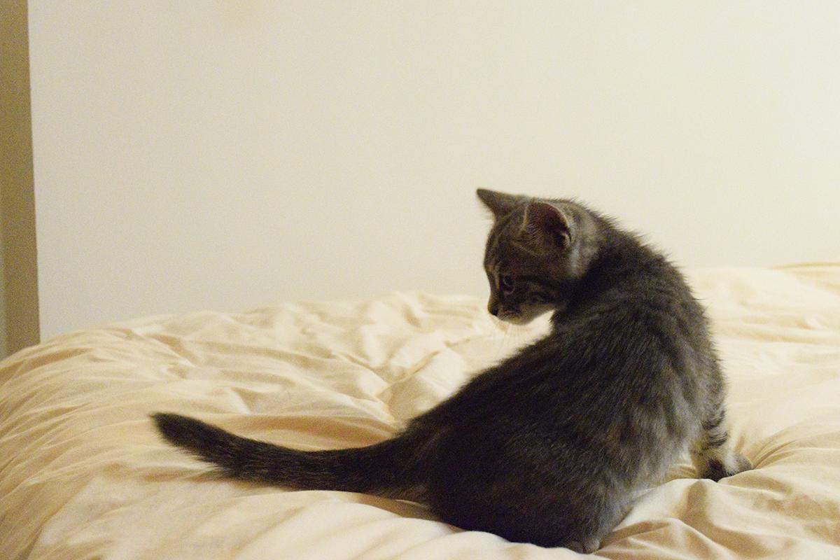 驚いたサバトラ猫の春太
