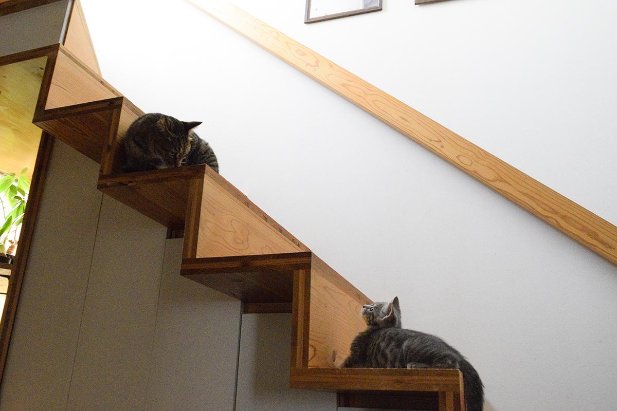 階段でじゃれあうキジトラ猫の虎ノ介とサバトラ猫の春太