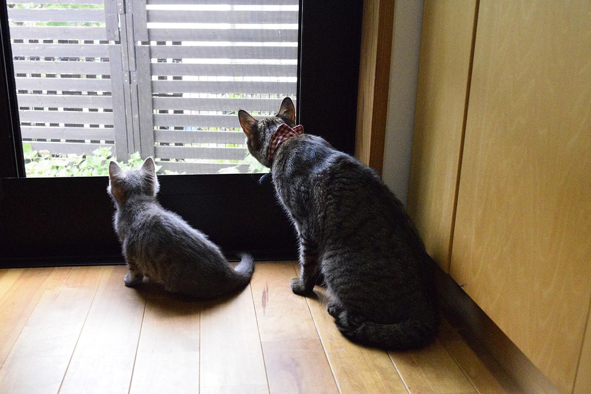 勝手口から外を眺める虎ノ介と春太