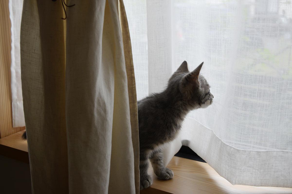 窓から外の虎ノ介を眺める春太