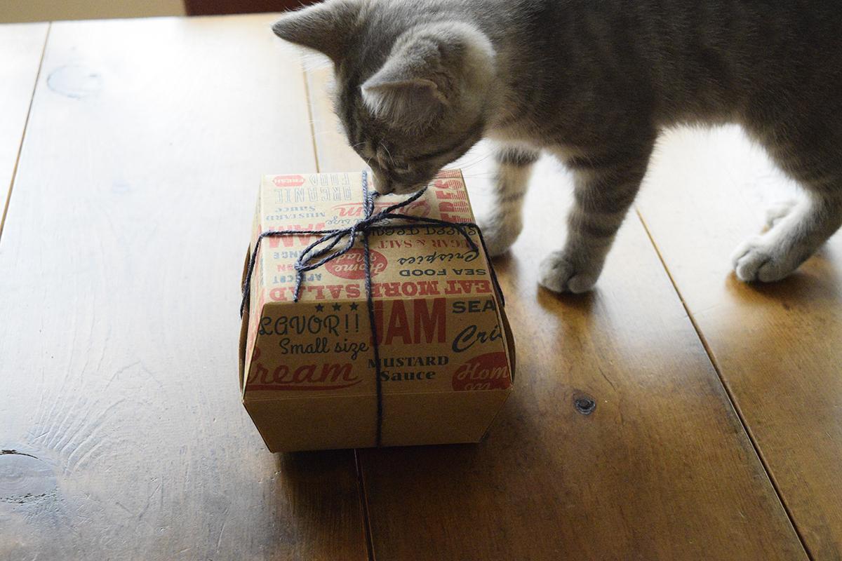 お部屋でプレゼントの中身をチェックするサバトラ猫の春太