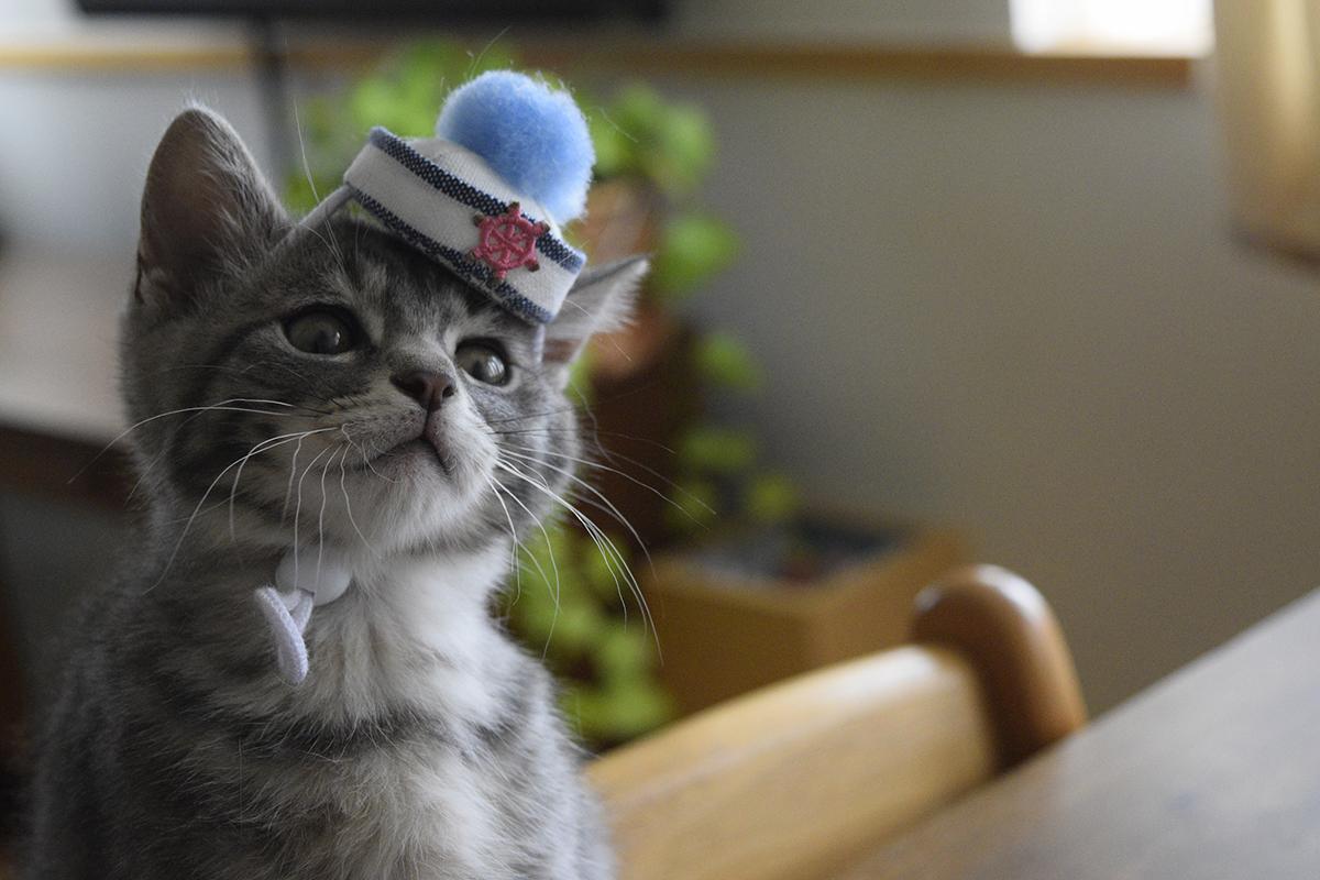 プレゼントの帽子をかぶった春太