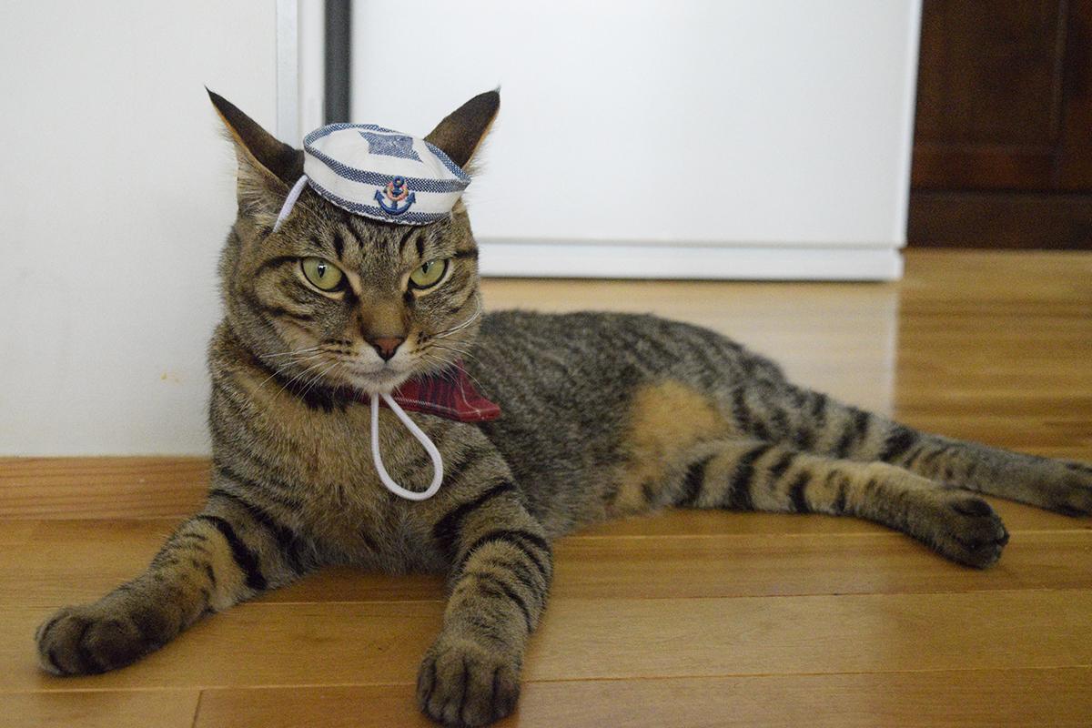 プレゼントの帽子をかぶったキジトラ猫の虎ノ介