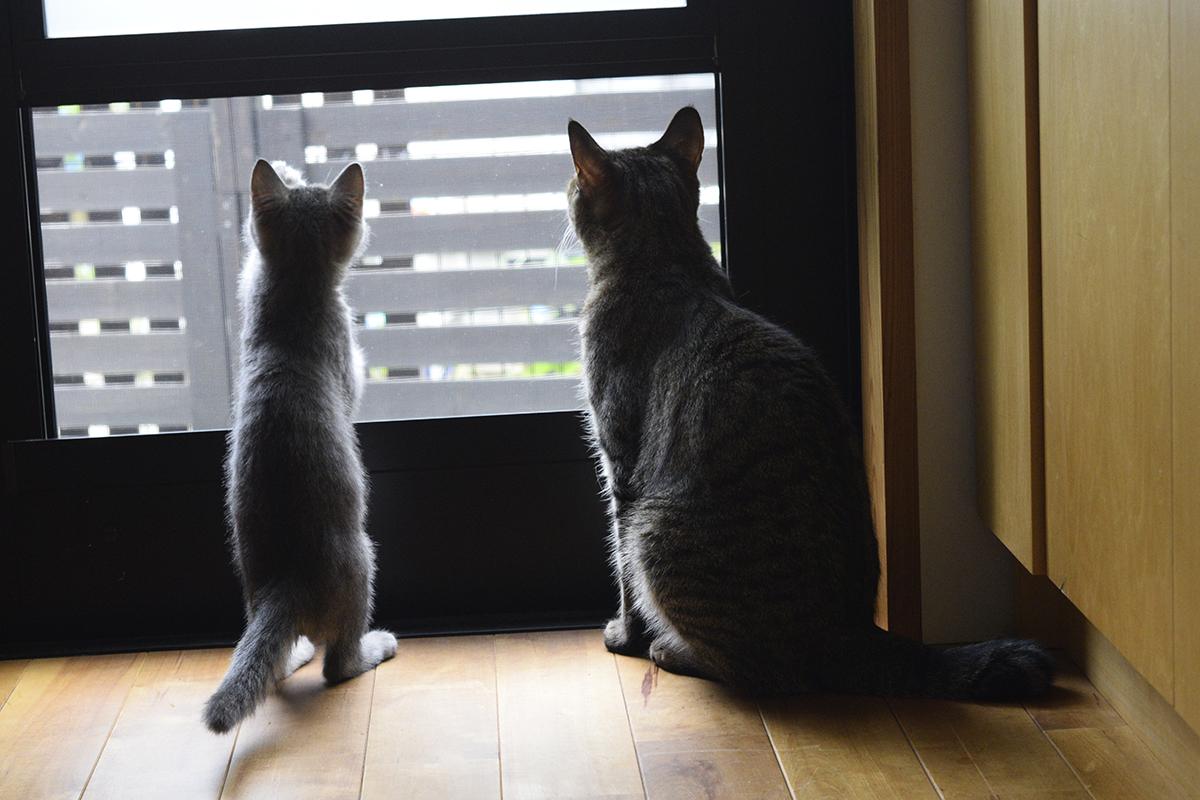 勝手口の網戸から外を眺める虎ノ介と春太