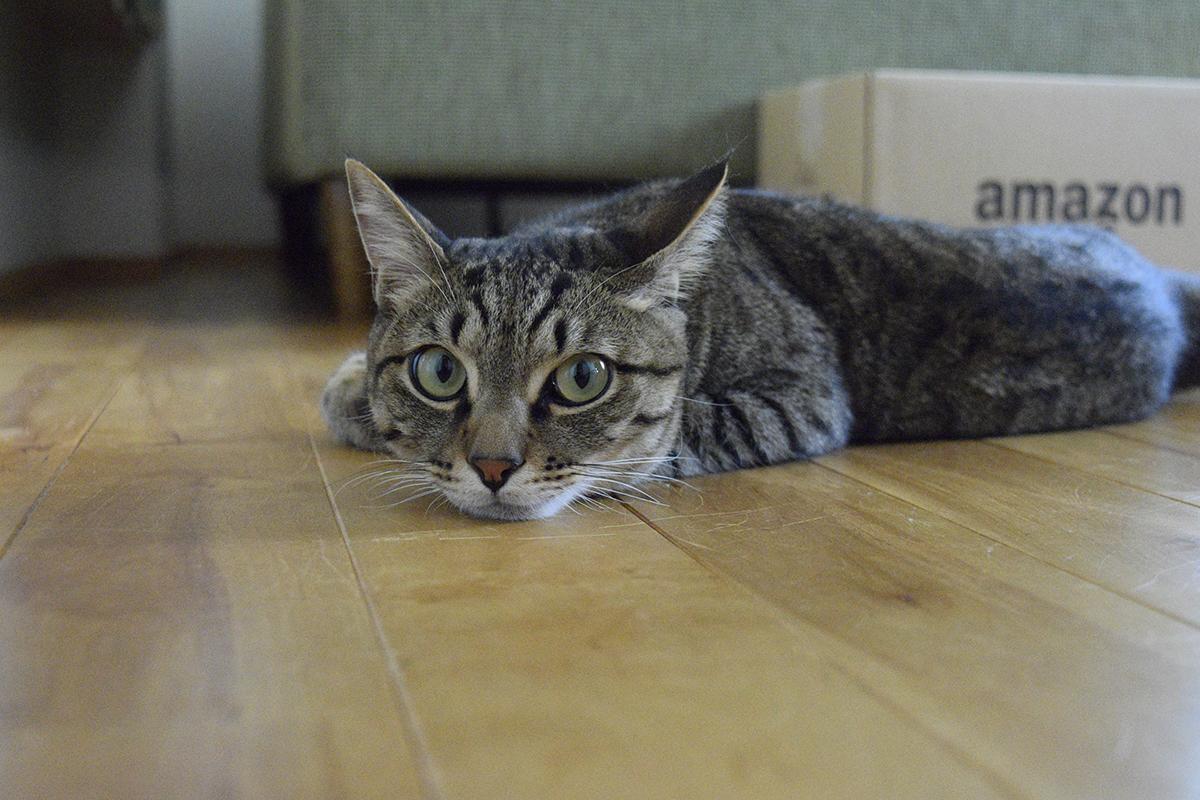 人間に助けを求めるキジトラ猫の虎ノ介