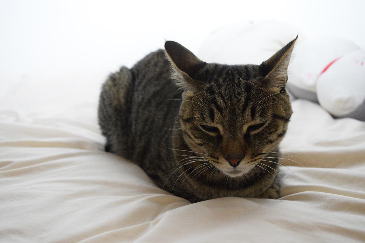 しんどそうにベッドの上にうずくまる虎ノ介