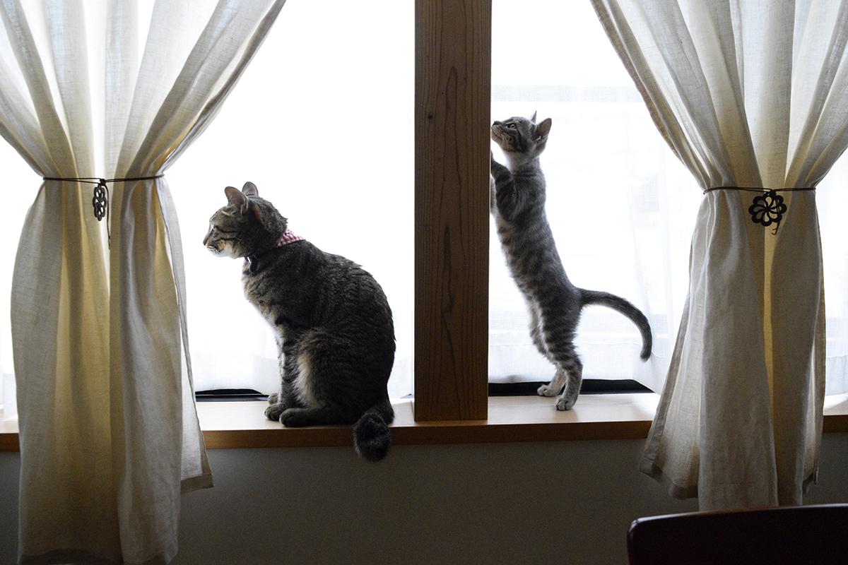 隣の窓に寄っていく春太