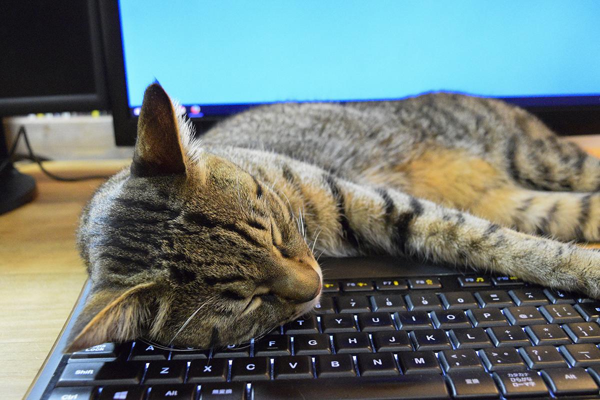 キーボードを枕にして眠りキジトラ猫の虎ノ介