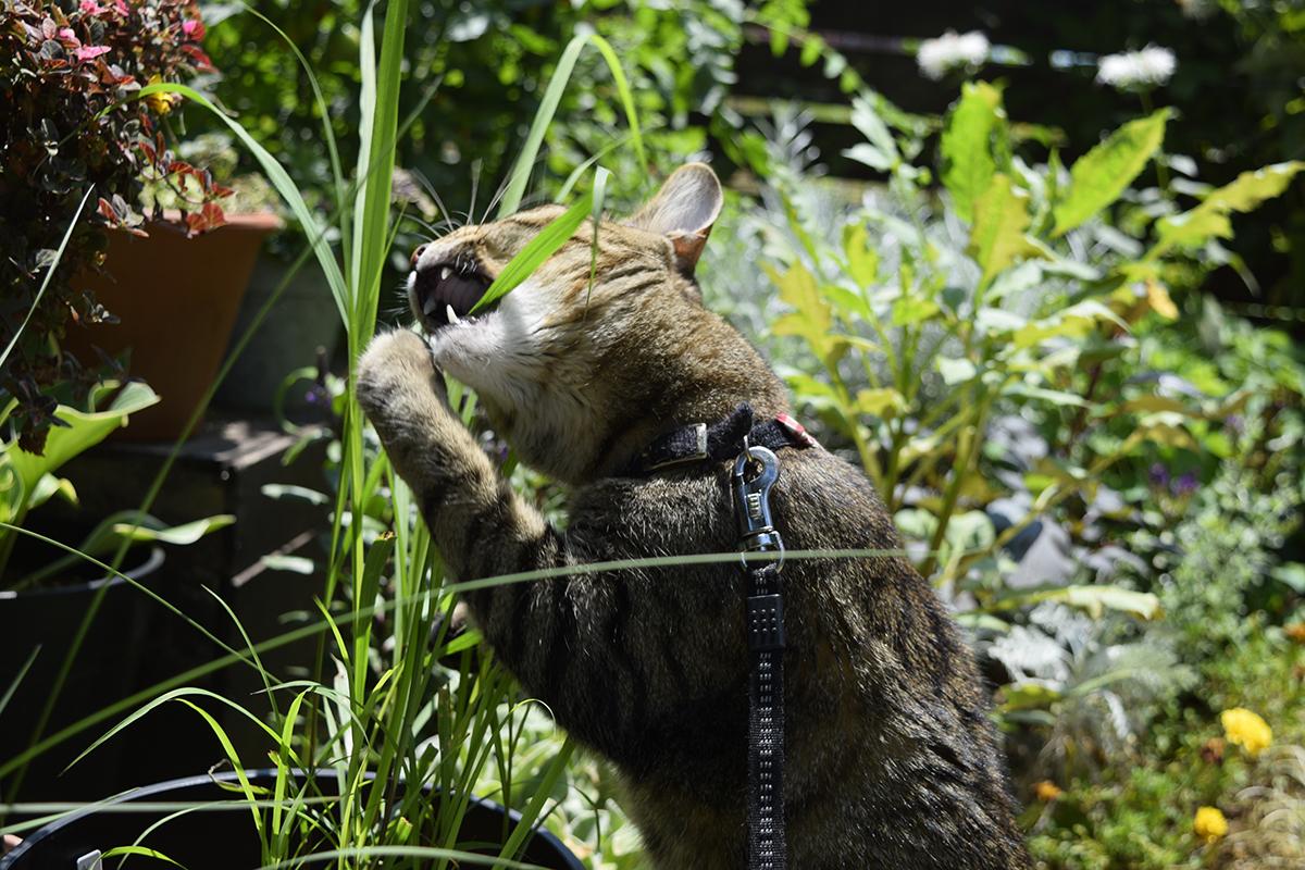 草を食べる虎ノ介