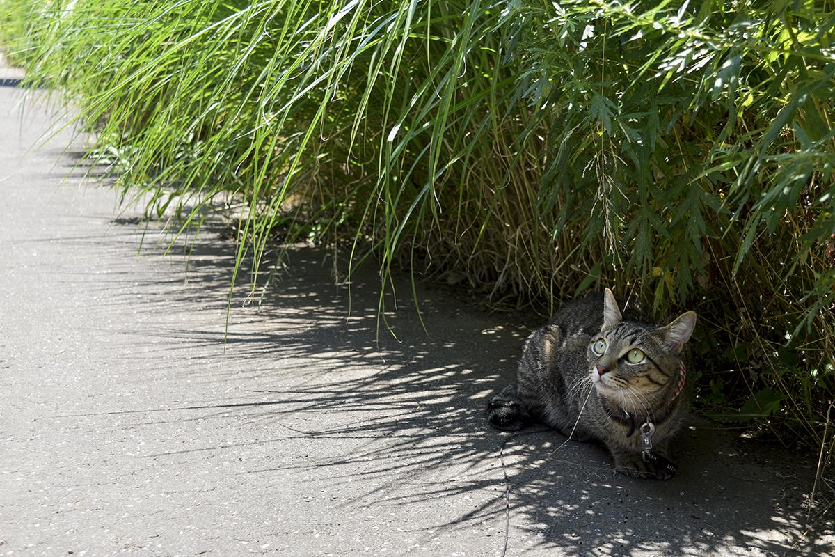 草の陰で涼む虎ノ介