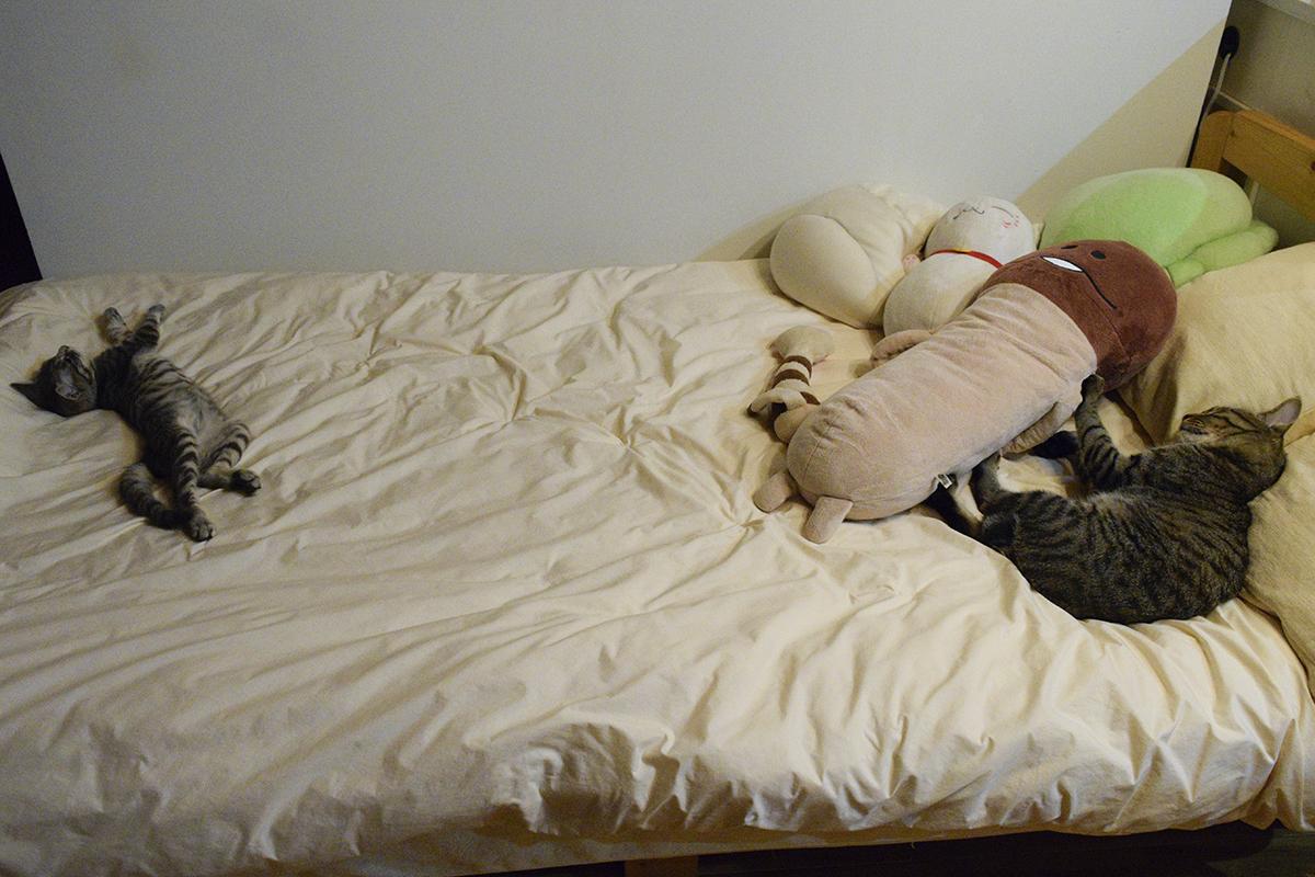 並んで眠るキジトラ猫の虎ノ介とサバトラ猫