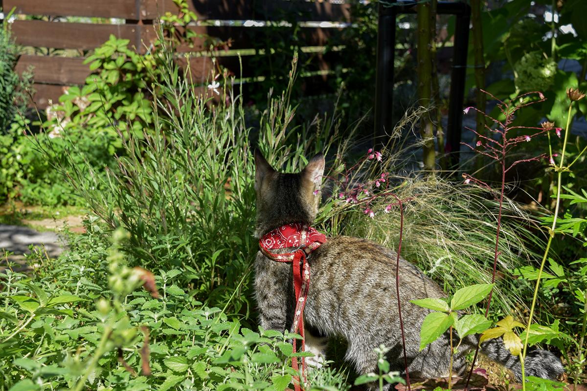 草の中にはいる2年前のキジトラ猫の虎ノ介
