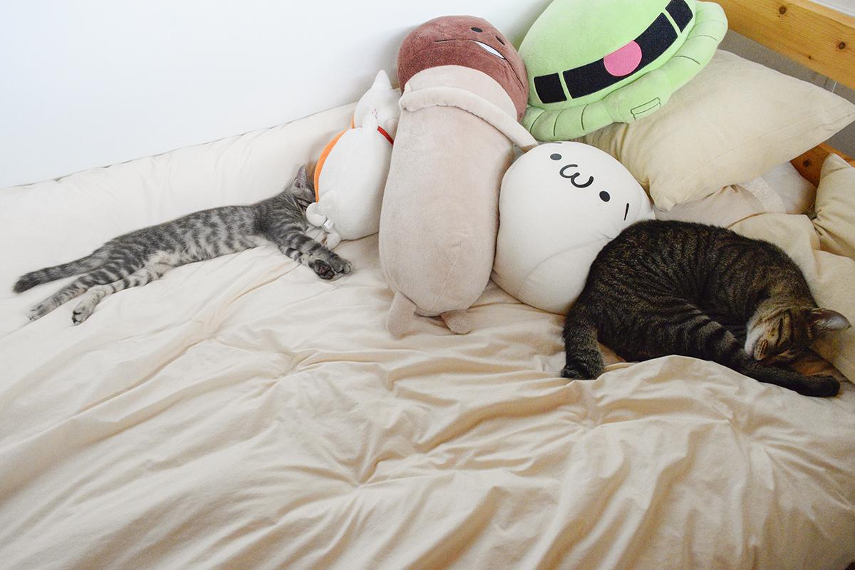 昼寝をするキジトラ猫の虎ノ介とサバトラ猫の春太