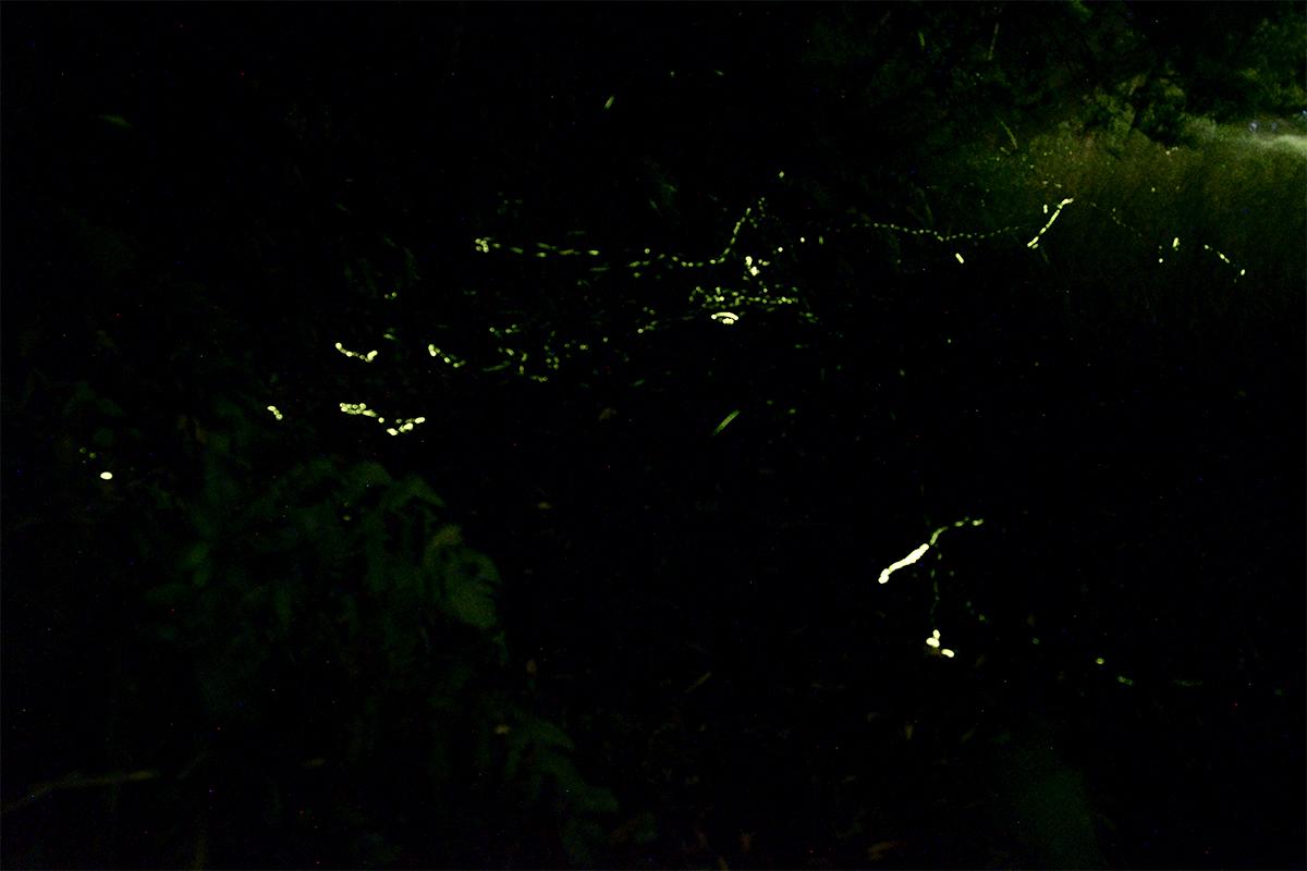 ホタルが飛ぶ景色