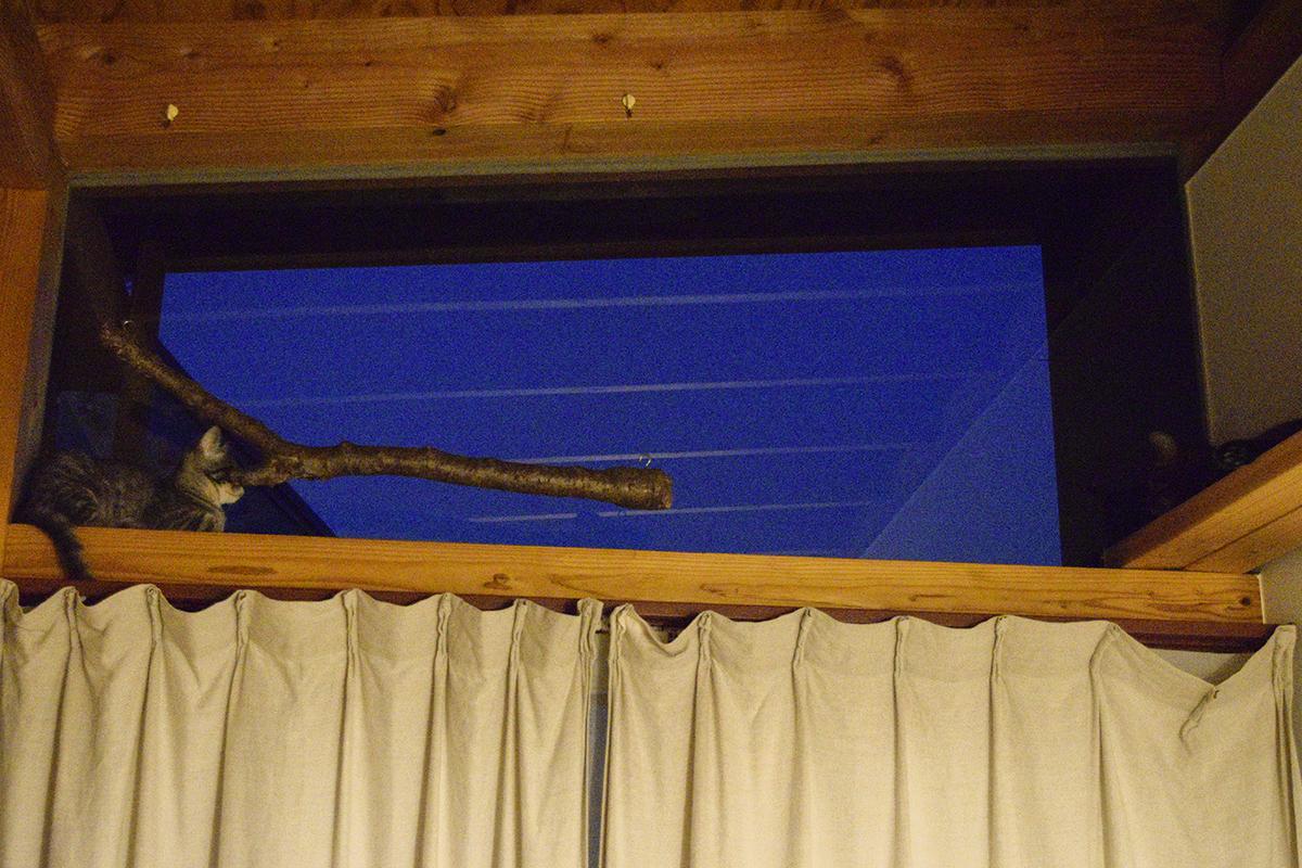 コウモリを眺めるキジトラ猫の虎ノ介とサバトラ猫の春太