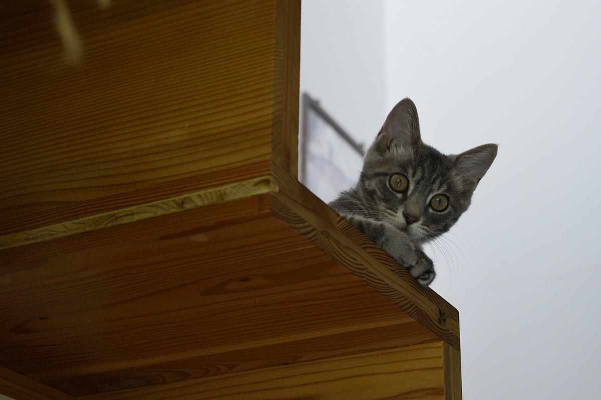階段から雨の中にでていくキジトラ猫の虎ノ介を見るサバトラ猫の春太