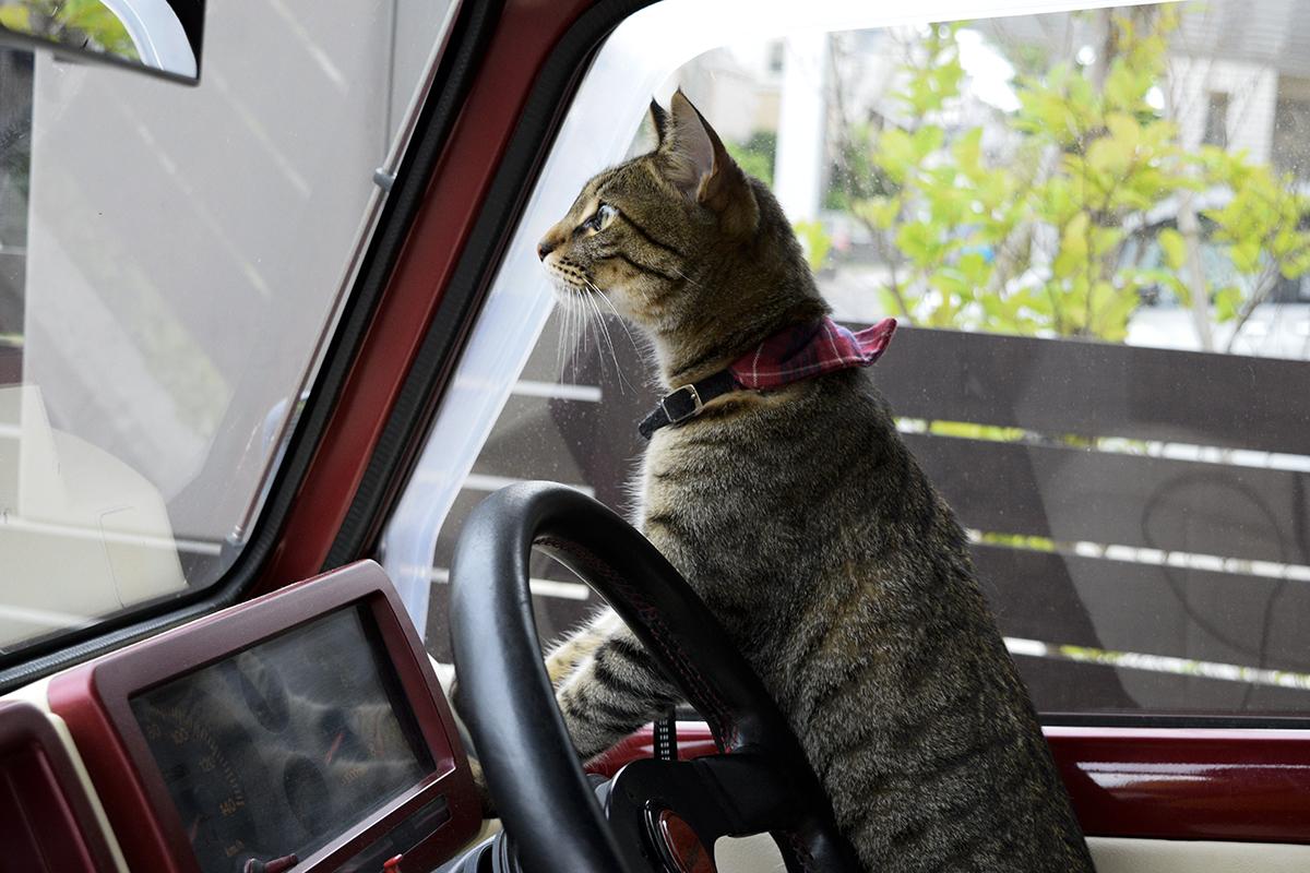 ドライブにいきたい虎ノ介