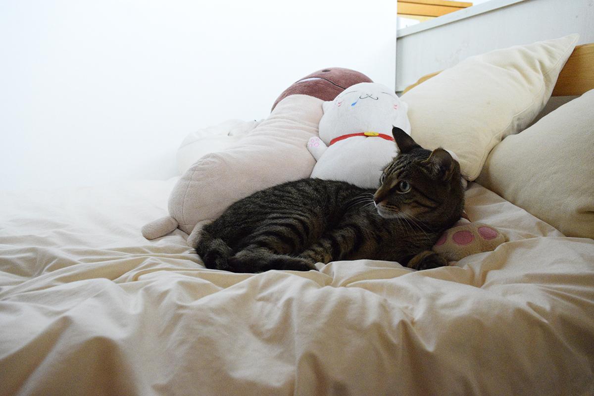 サバトラ猫の春太にいらついた表情をするキジトラ猫の虎ノ介