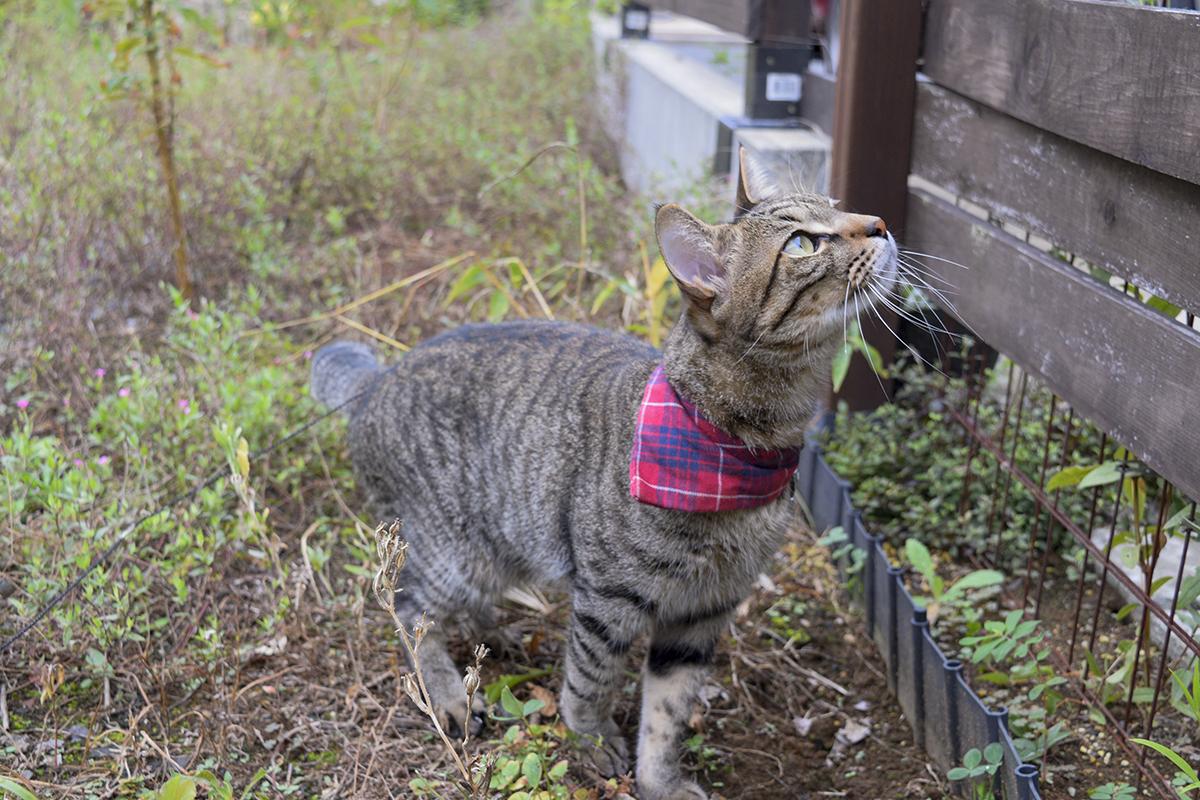 バッタをみつけてやる気をだすキジトラ猫の虎ノ介