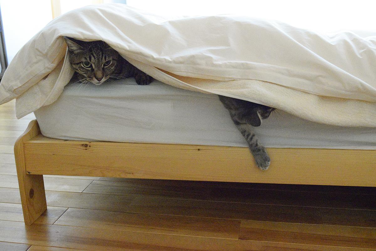 ベッドでだらける虎ノ介と春太