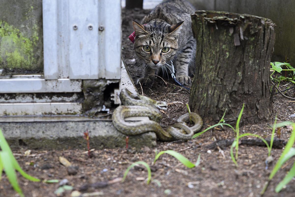 ヘビをみつけた虎ノ介