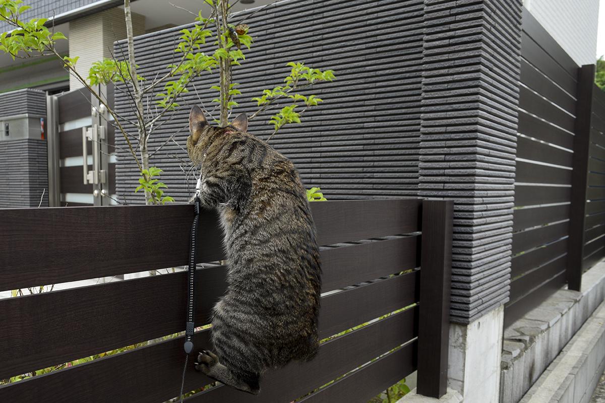 セミを発見したキジトラ猫の虎ノ介
