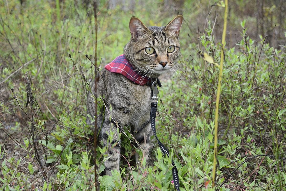 セミを見送るキジトラ猫の虎ノ介