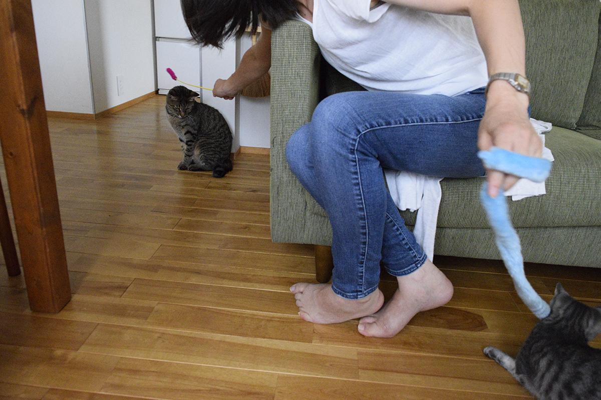 2匹同時に遊ぶ動物病院のお姉さん