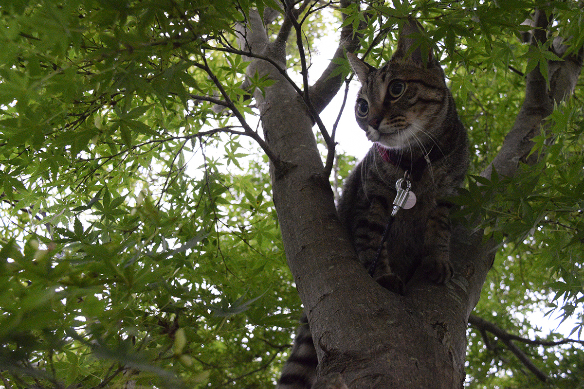 セミを発見して木に登る虎ノ介