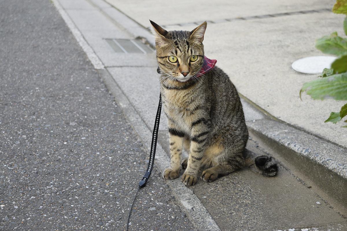 犬を眺めるキジトラ猫の虎ノ介