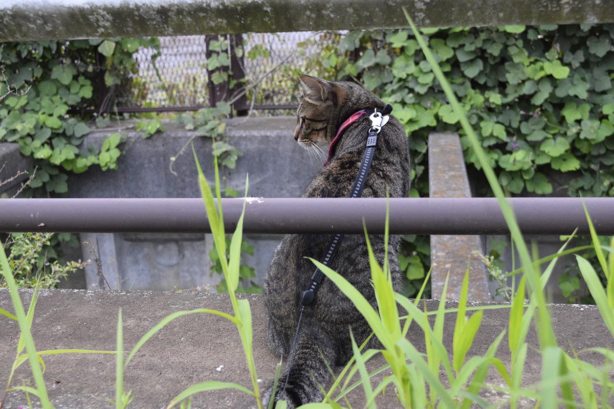 水浴びをする鳥をみるキジトラ猫の虎ノ介