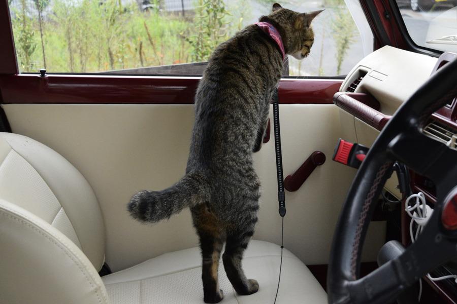車の中から犬を見る虎ノ介