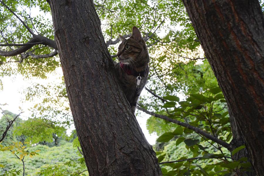 木の上から犬を見るキジトラ猫の虎ノ介